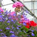 Spring Annuals and Perennials