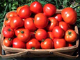 Hintons Summer Tomatoes