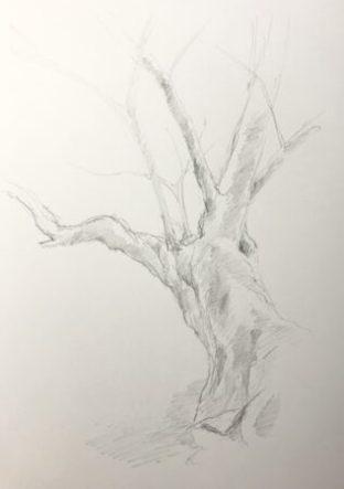樹木デッサン 3