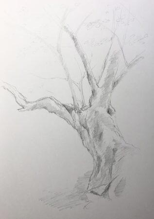 樹木デッサン 5