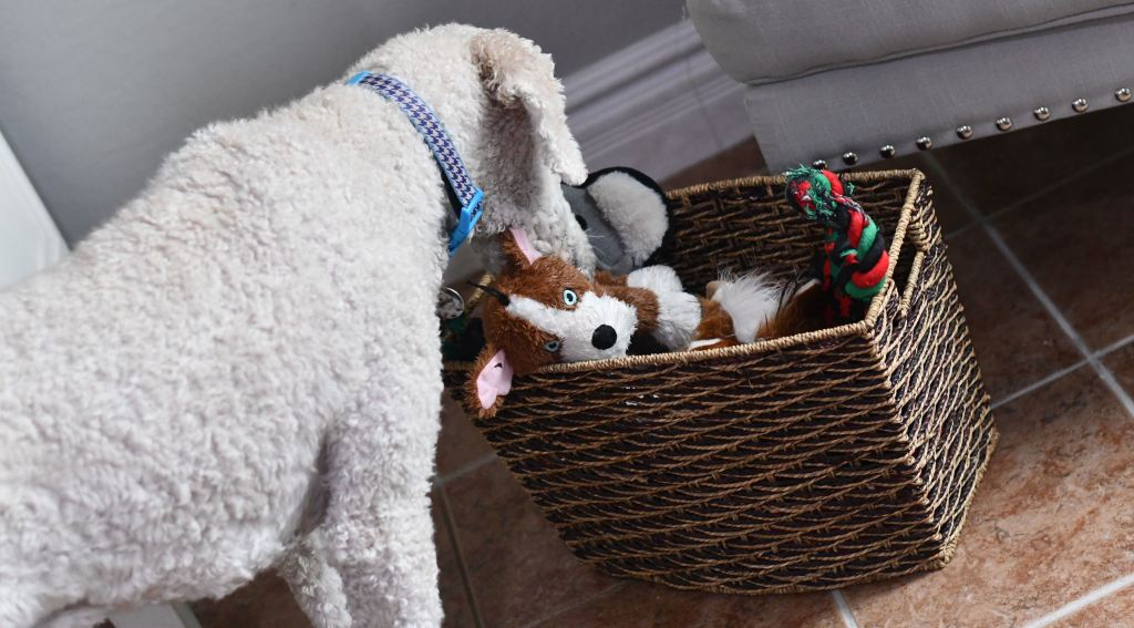 linas dog sniffing basket of pet toys
