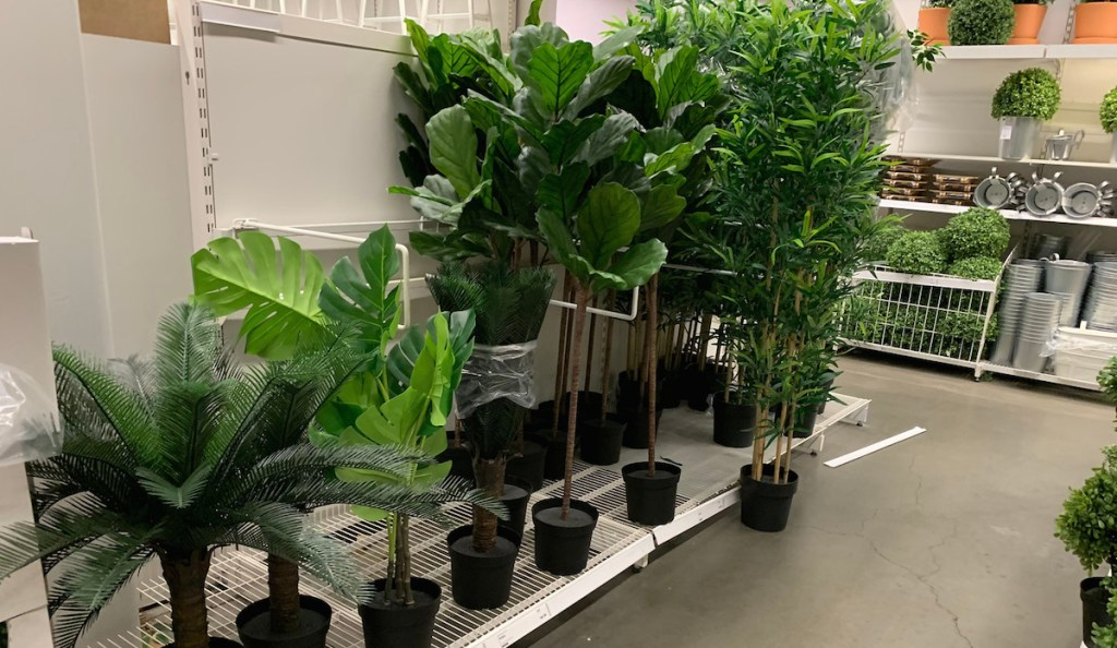 potted green plants in store aisle