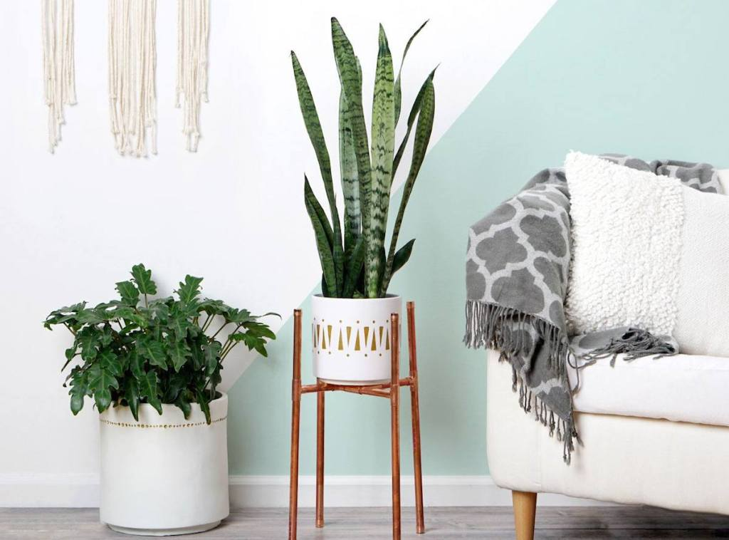 boho inspired modern planted greenery in white planters on floor next to couch