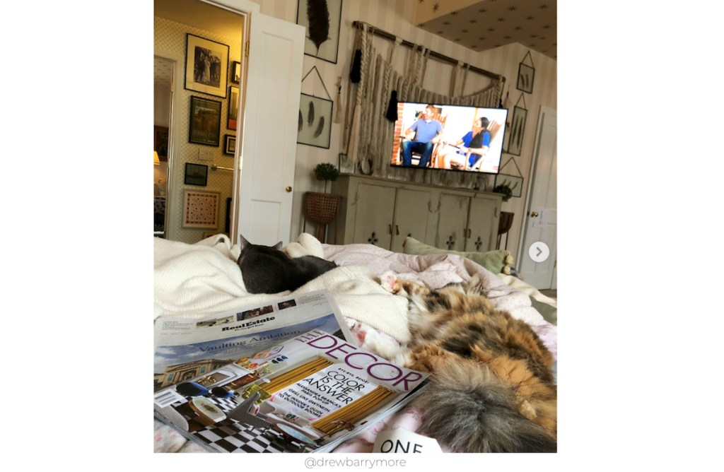 instagram photo of tv and console table with cats on bed and elle decor magazine