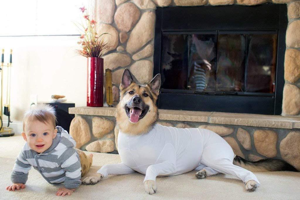 dog with white onesie sitting next to baby