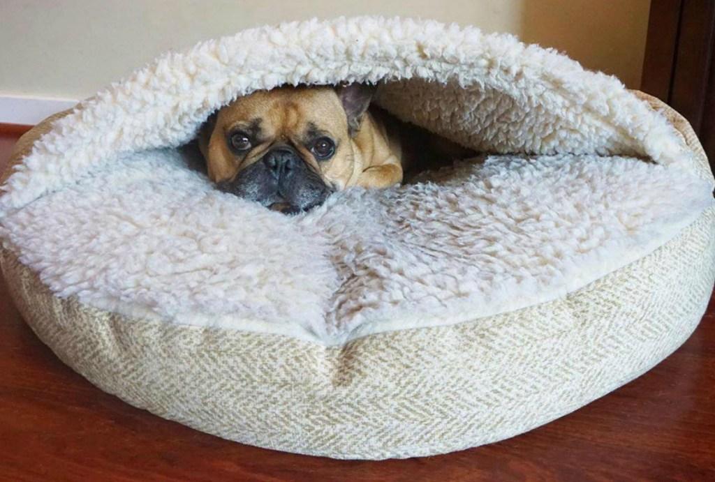 dog laying on Snoozer Luxury Cozy Cave Dog Bed
