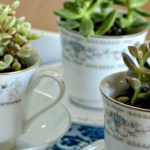 Succulent Tea Cups Mother S Day Gift Idea Hip2save