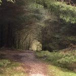 View through a tunnel of trees in Gisburn forest