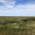 A view across the salt marshes from the coastal path