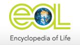 Eol Logo Header