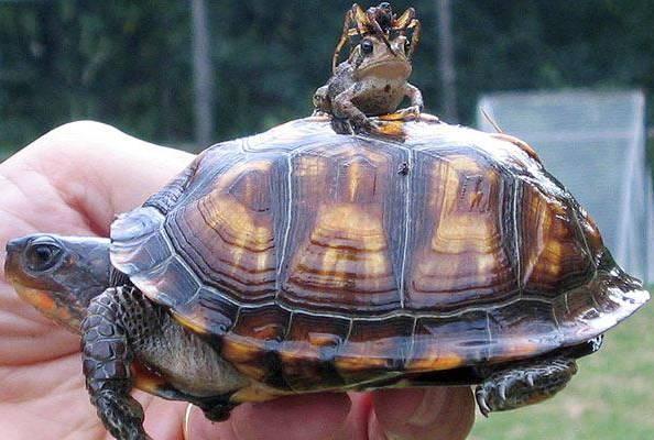 turtle-frog-spider_1015831i.jpg