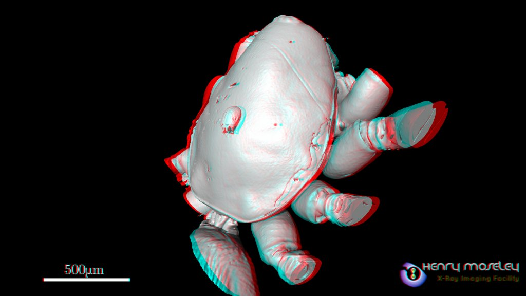 Mite_On_Spider_2_Red-Cyan_Anaglyph