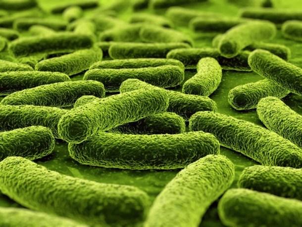 Bacterias en tuberculosis
