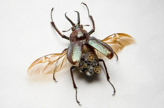 green-metallic-stag-beetle