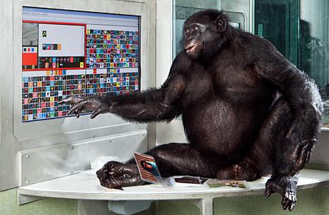 Bonobo usando lexigrama