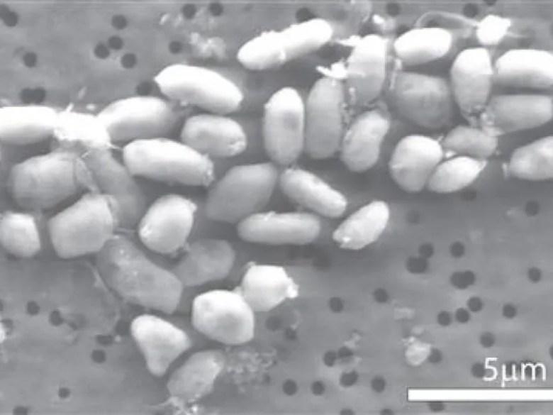 bacteries nasa arsenic