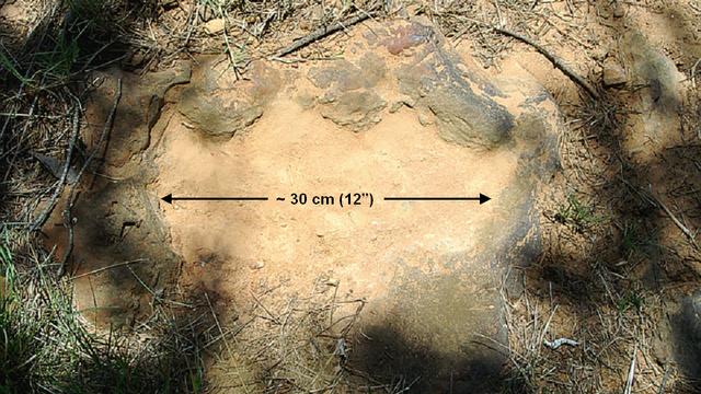 Huella de dinosaurio encontrada