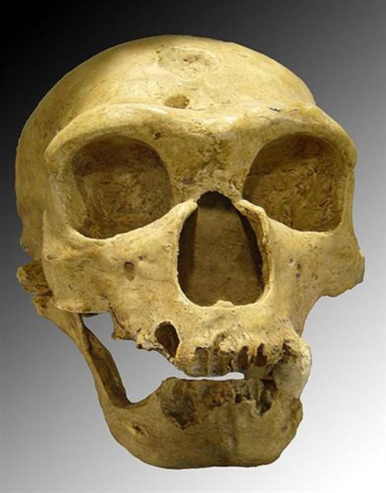 Cráneo neandertal