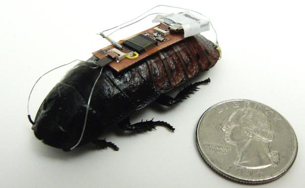 cucaracha control remoto