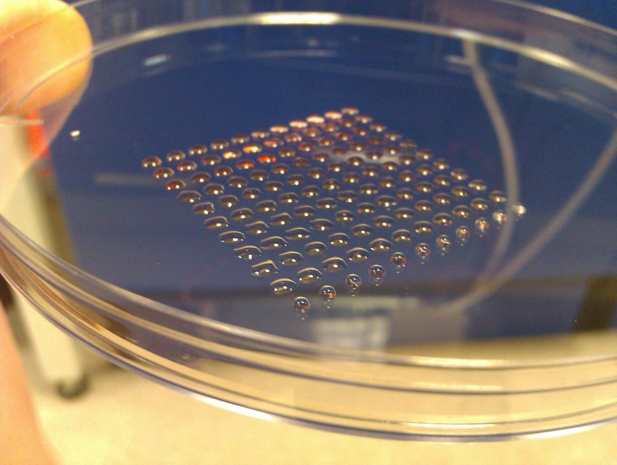 Primera impresión 3D de células madre humanas