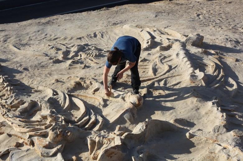 cementerio de ballenas