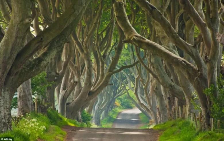 Foto: Alamy // King's Road, camino que lleva a King's Landing