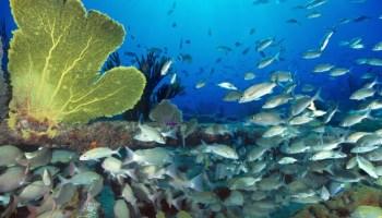 Contaminación acústica en océanos