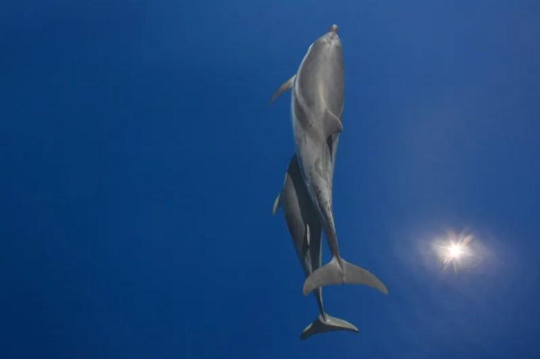Delfines. Foto de Giannis Ploumis. National Geographic Photo Contest