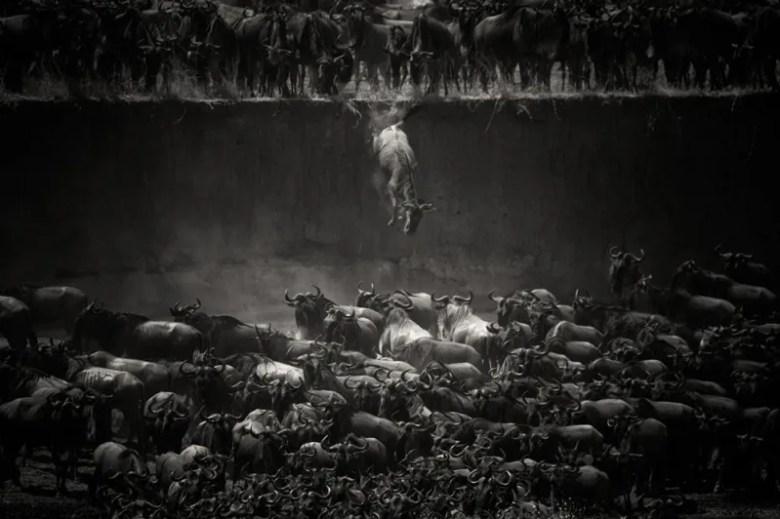 Tanzania. Foto de Nicole Cambre. National Geographic Photo Contest
