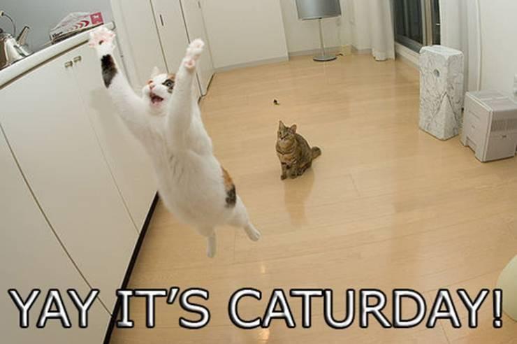 caturday3