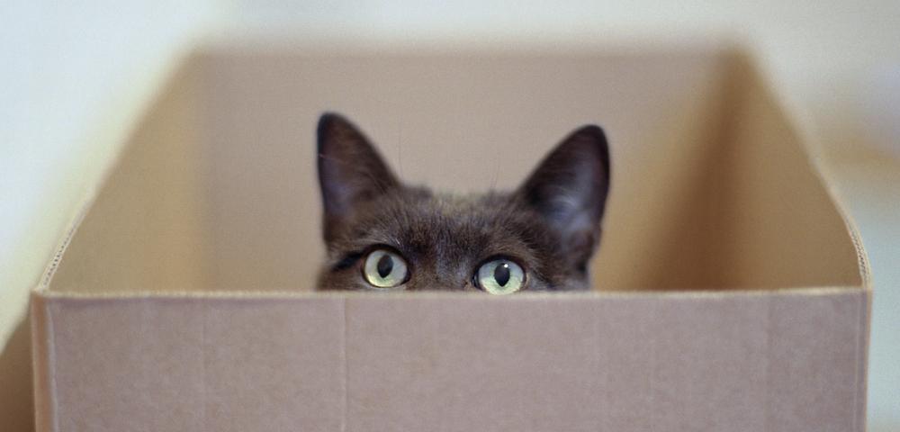 gatos caja de cartón