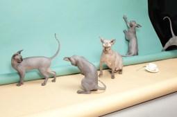 Animal Behaviour, de Kimmo Metsaranta (WPO)