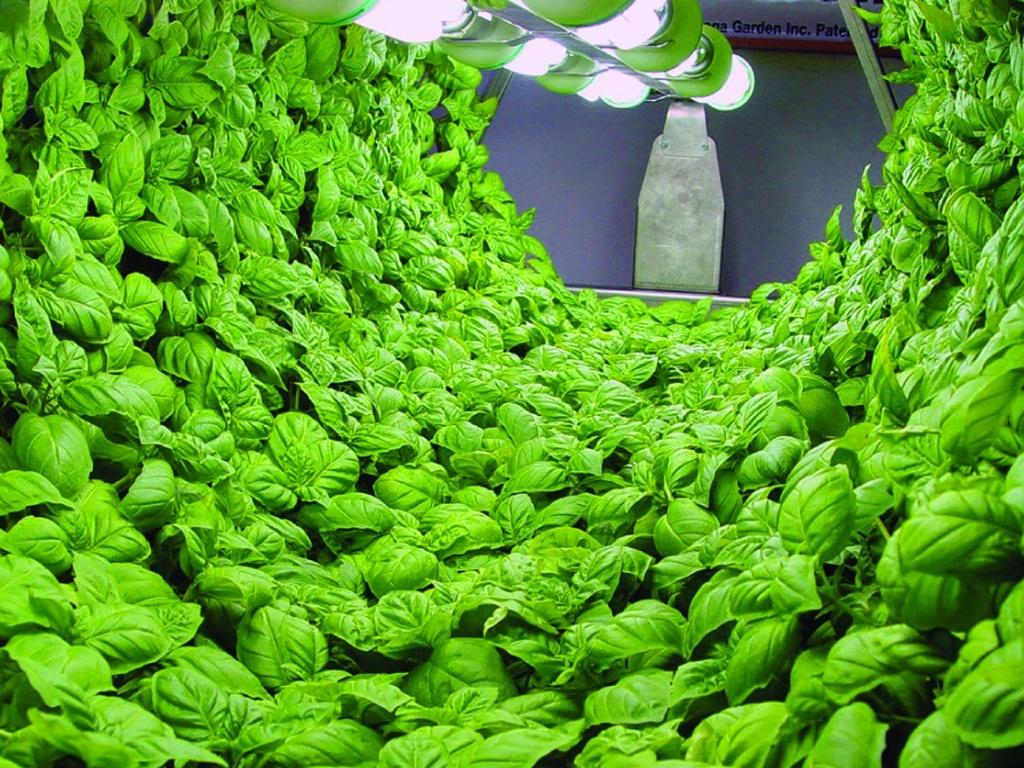 Biomass Production Chamber
