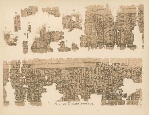 Parte de los restos de los papiros originales, expuestos en la University College de Londres. Fuente: Wikipedia