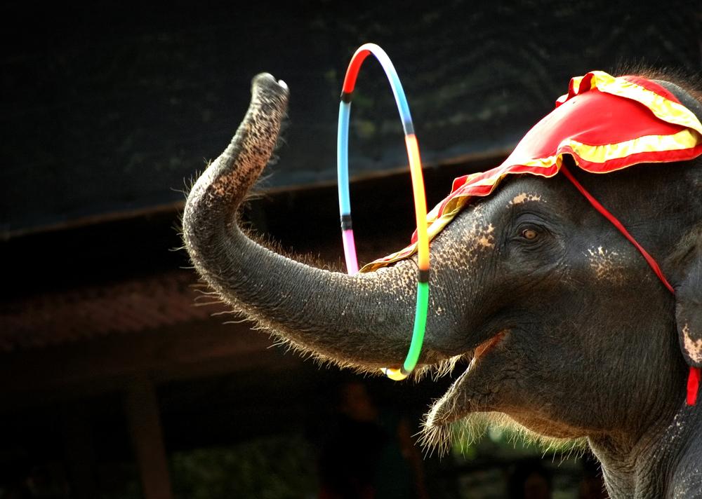 animales en circos