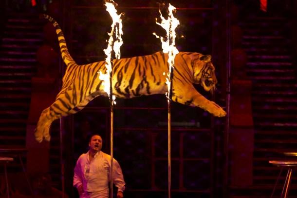 animales en circo