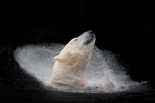 Polar Bear Bath