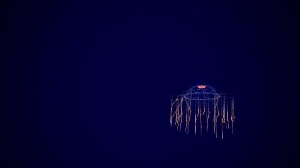 Okeanos | NOAA