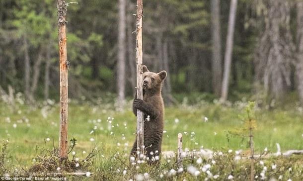 osos17