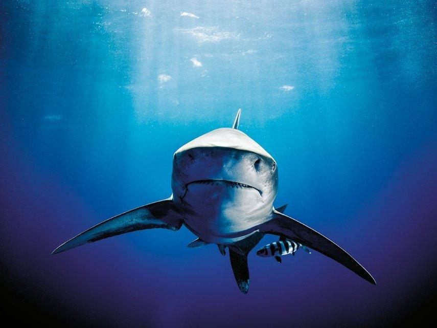 encuentros con tiburones