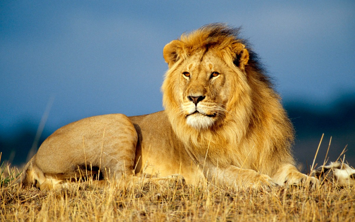 Relación entre leones y hienas