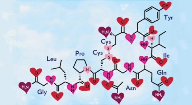 hormona del amor