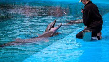 delfín,