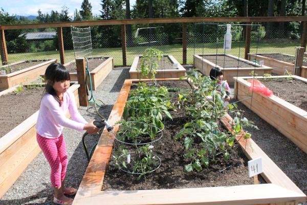 community garden_planting