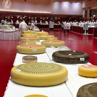 World Championship Cheese Contest in Madison, Wisconsin! With over 3,667 entries from around the world, this was such an amazing contest!
