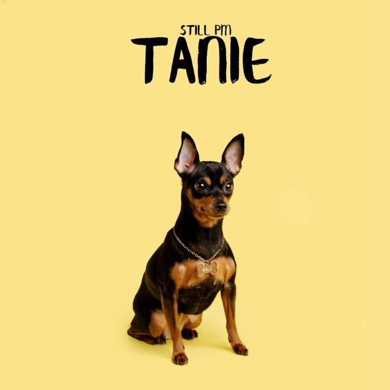 Still PM - Tanie (album cover)