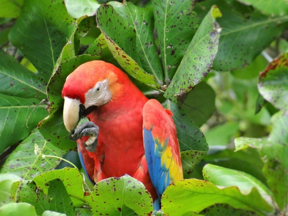 La Leona Ecolodge Corcovado Costa Rica