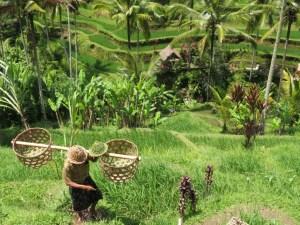 Tegalagang-Rijstvelden-Bali