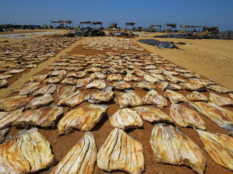 Vismarkt Negombo Sri Lanka