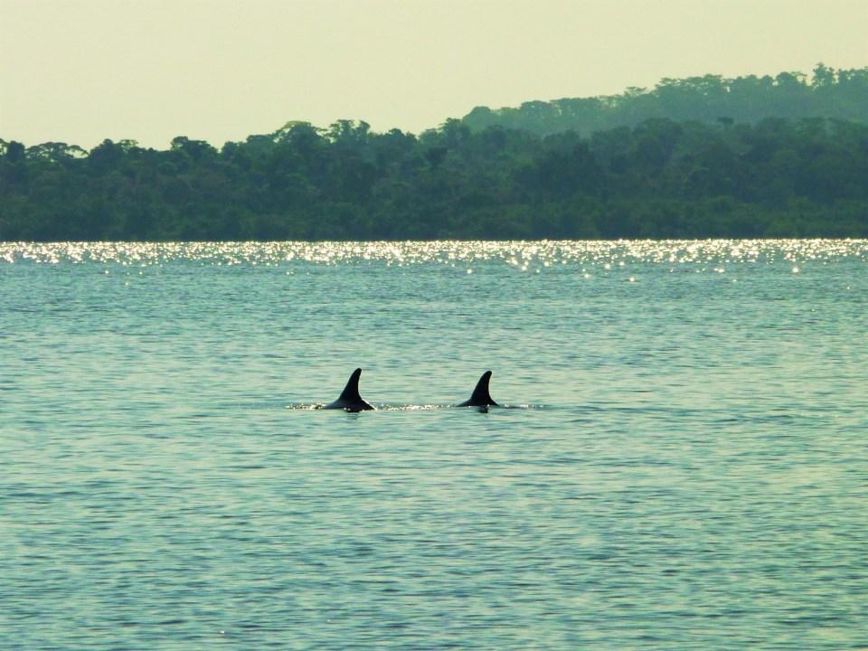Dolphin Bay op Bocas del Toro Panama